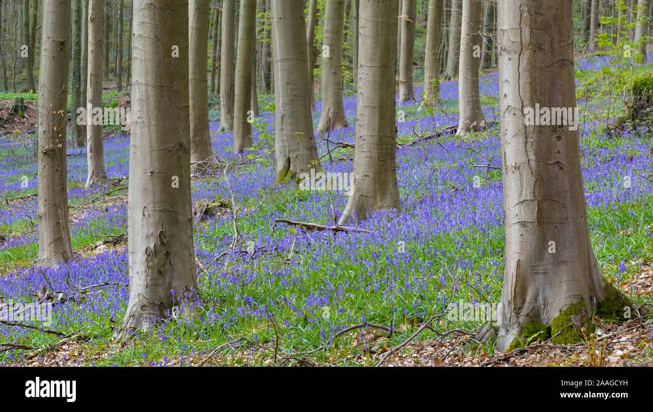 Naturfotografie Stock Photo