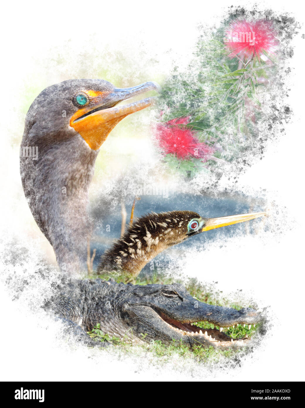 Wildlife of the Everglades National Park - Image-Montage of Birds, Alligator, Flowers and Butterfly Stock Photo