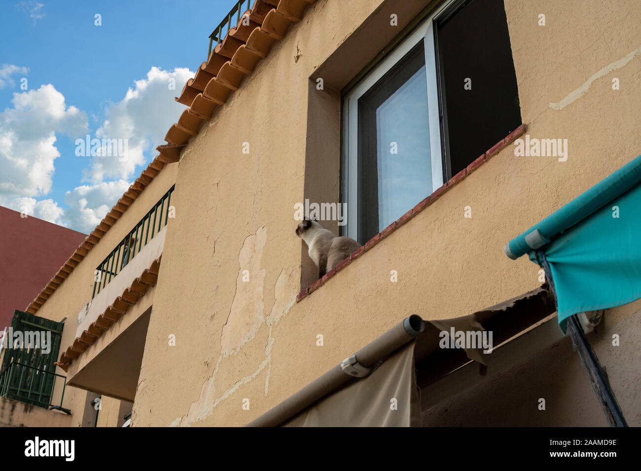 A Siamese cat sits on a window ledge looking up at the sky in Villefrance Sur Mer, France. Stock Photo