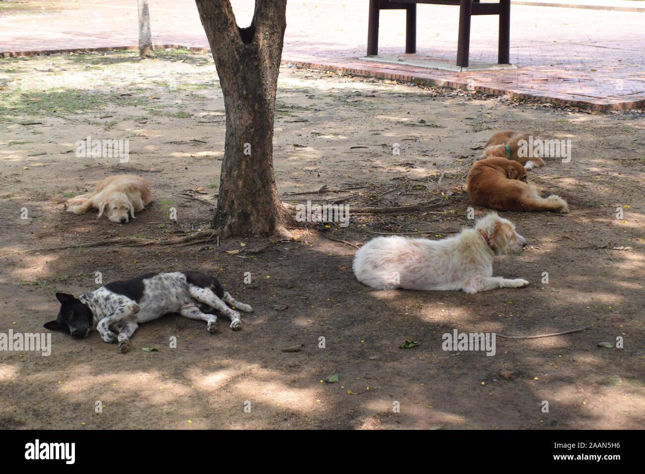 sleeping dogs thailand Stock Photo