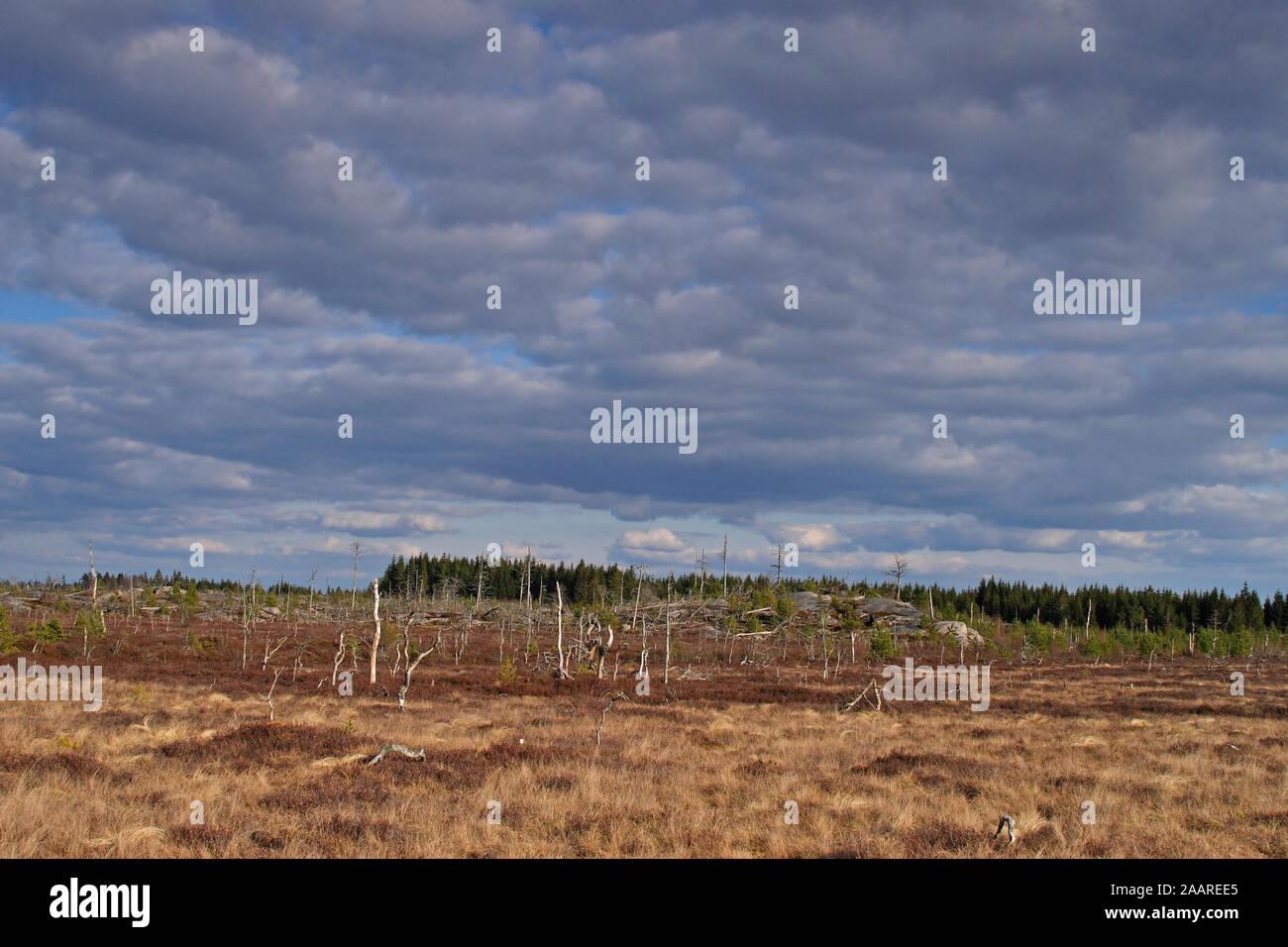 Schweden; Moor; Kuleskog; Fruehjahr Stock Photo
