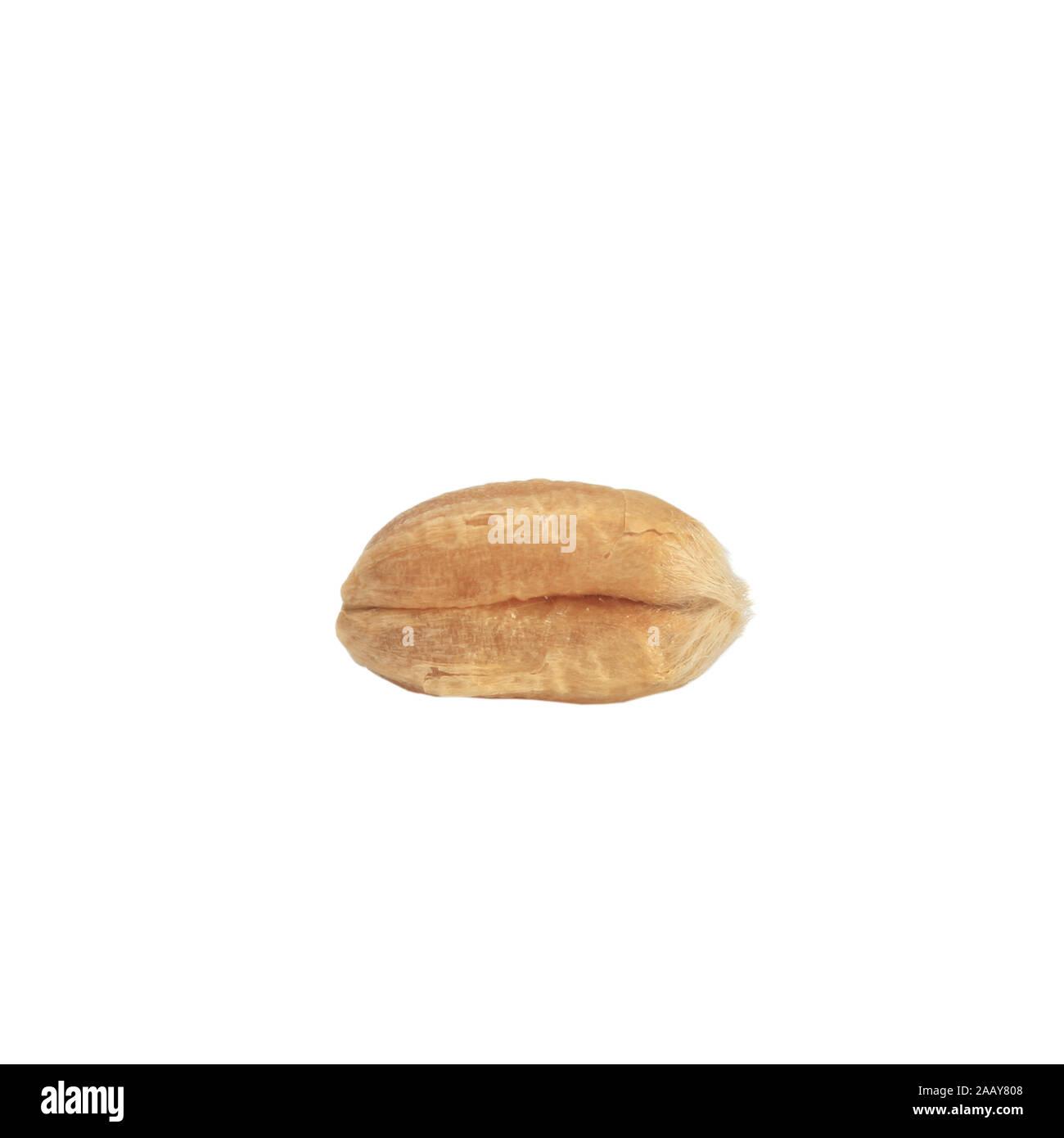 Saat-Weizen, Weich-Weizen, Weizen (Triticum aestivum), Einzelkorn | bread wheat, cultivated wheat (Triticum aestivum), single grain | BLWS034985.jpg [ Stock Photo