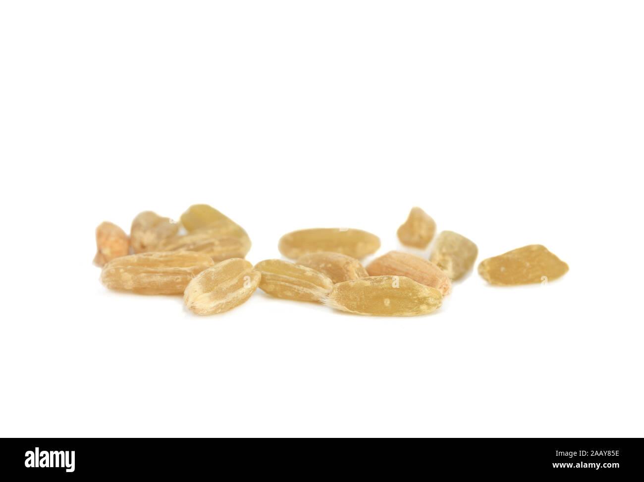 Dinkel, Spelz (Triticum spelta), Gruenkern, Einzelkoerner | spelt wheat (Triticum spelta), unripe spelt grain, single grains | BLWS035023.jpg [ (c) bl Stock Photo