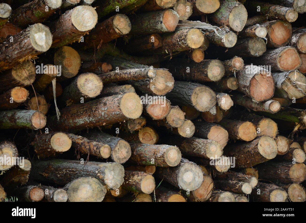 deforestation and climate change Stock Photo