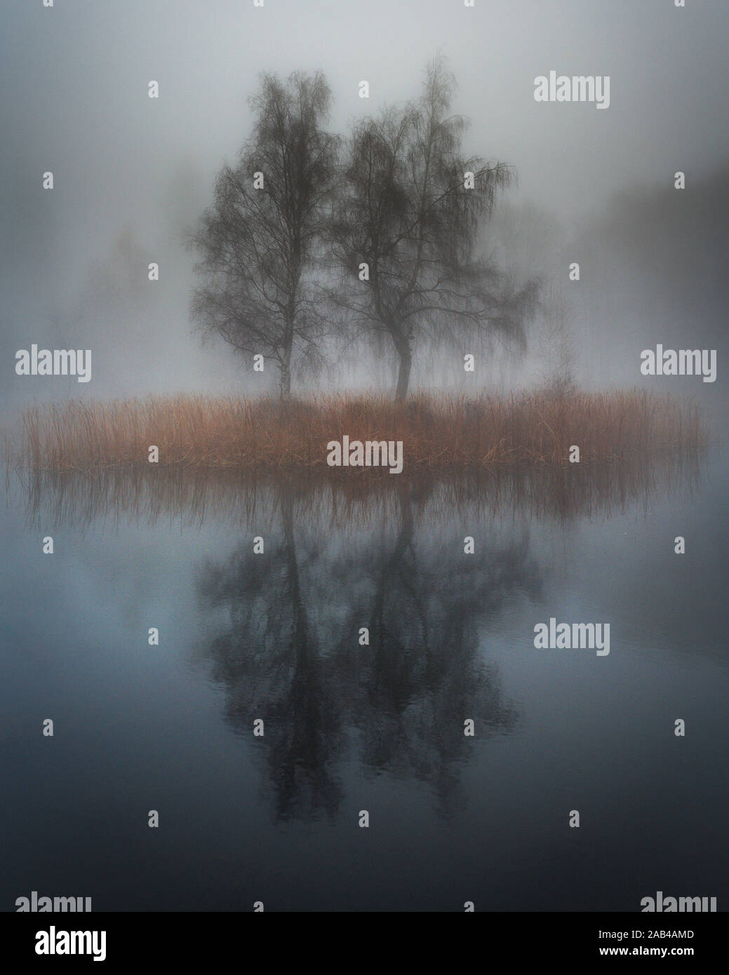 Moody lake in the fog. Lonely Island with trees in mist. Stock Photo