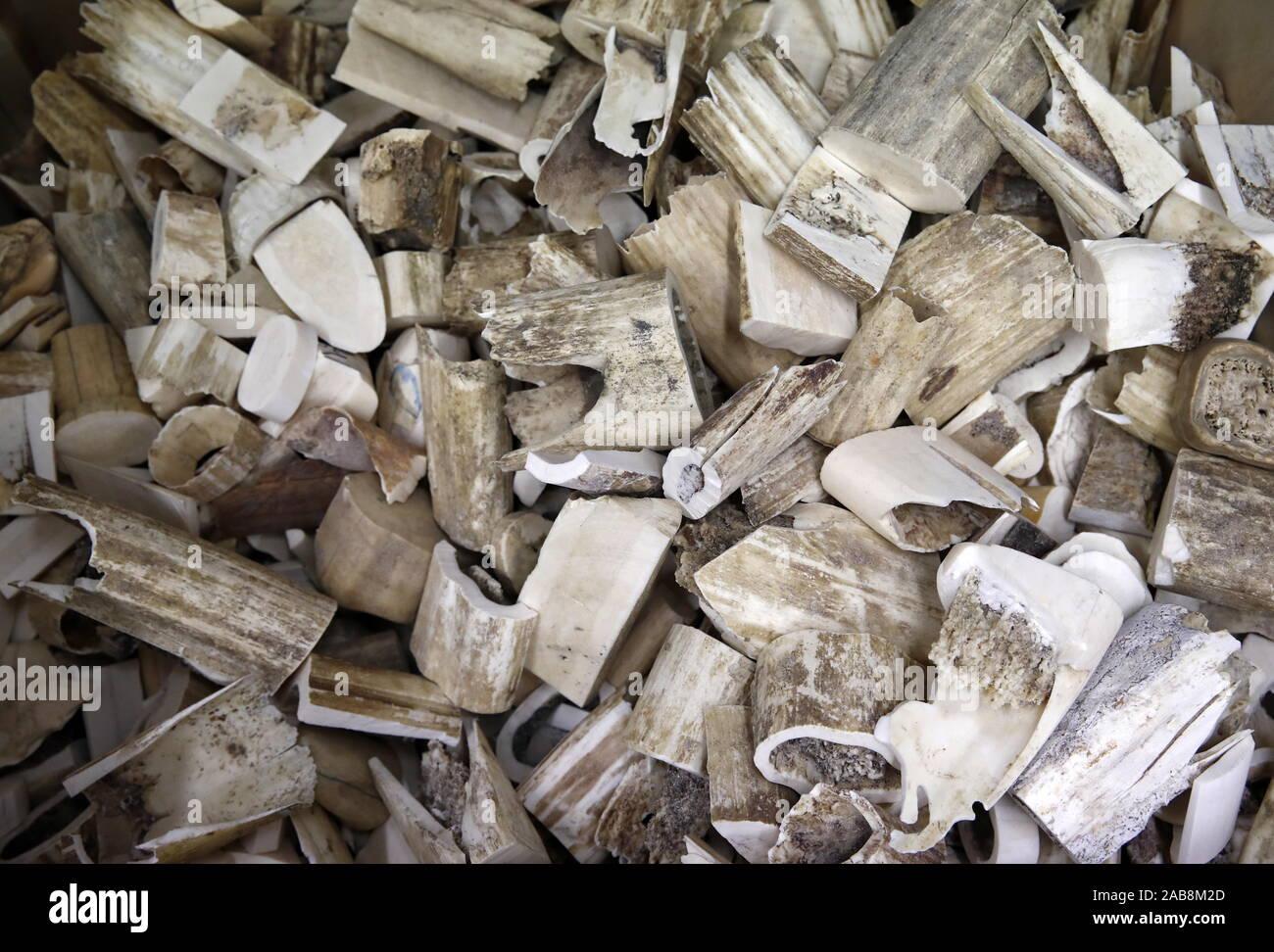Anadyr Chukotka Russia November 22 2019 Blanks For Carving At A Bone Carving Art Studio At