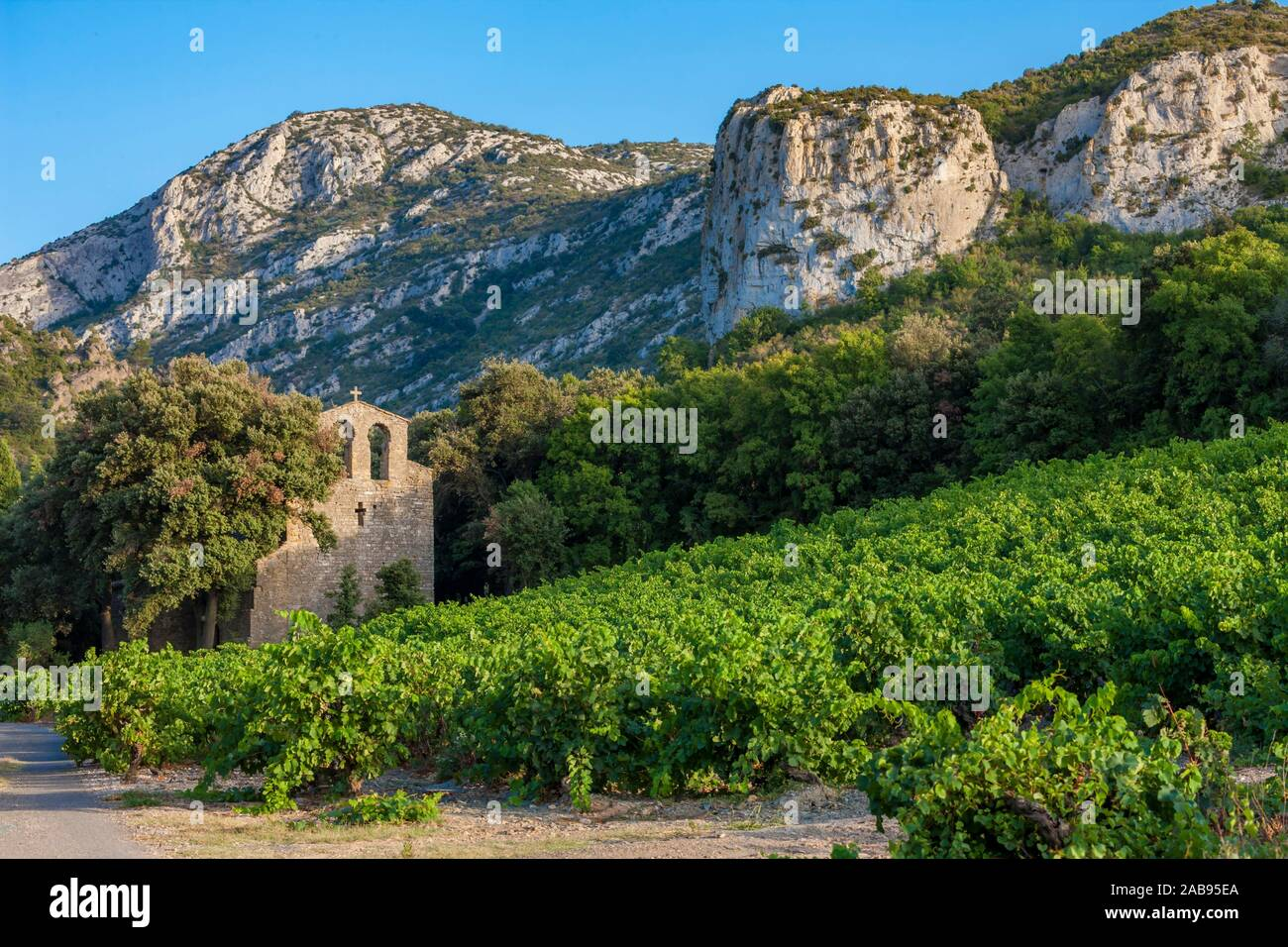 vineyards in the wine region Languedoc-Roussillon, Roussillon, France. Stock Photo