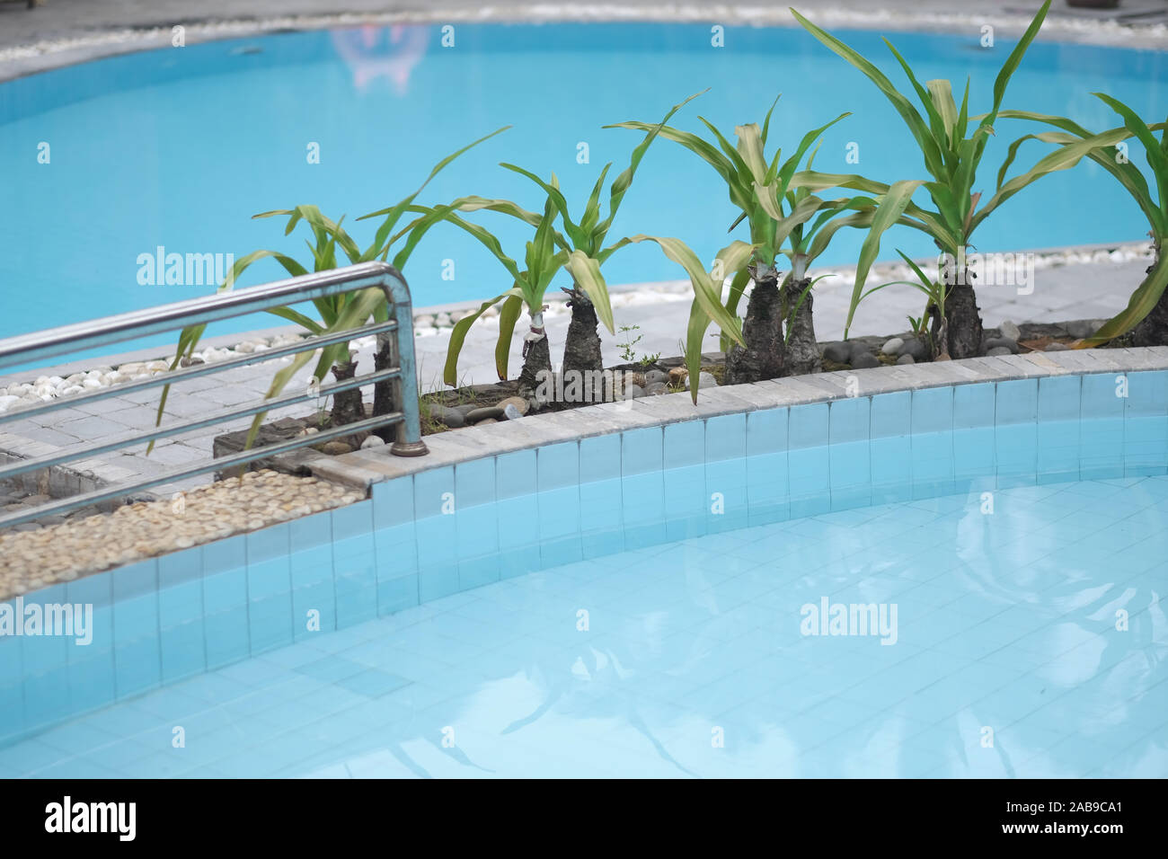 Swimming Pool With Clear Blue Water And Exotic Plants With Long