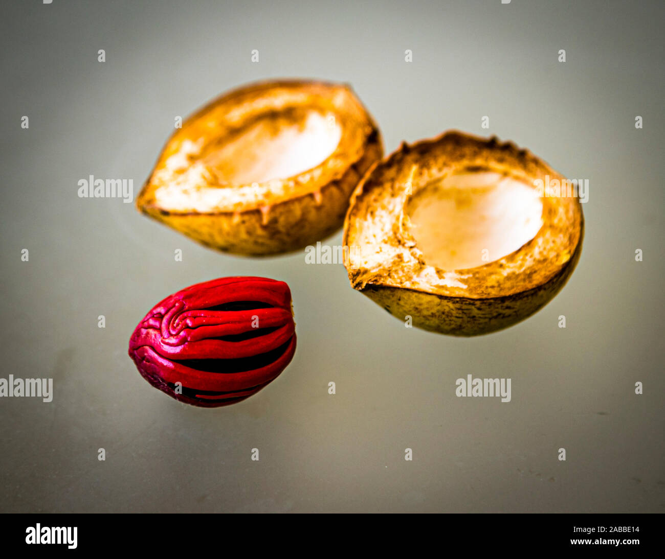 Nutmeg Fruit, Mace and Seed in The Lime, Grenada Stock Photo