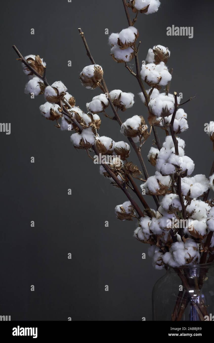 Branches Of Natural Cotton In A Glass Vase On A Dark Background Christmas Or New Year Concept Stock Photo Alamy