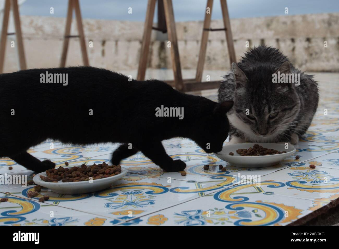 Two cats eating from same bowl Stock Photo