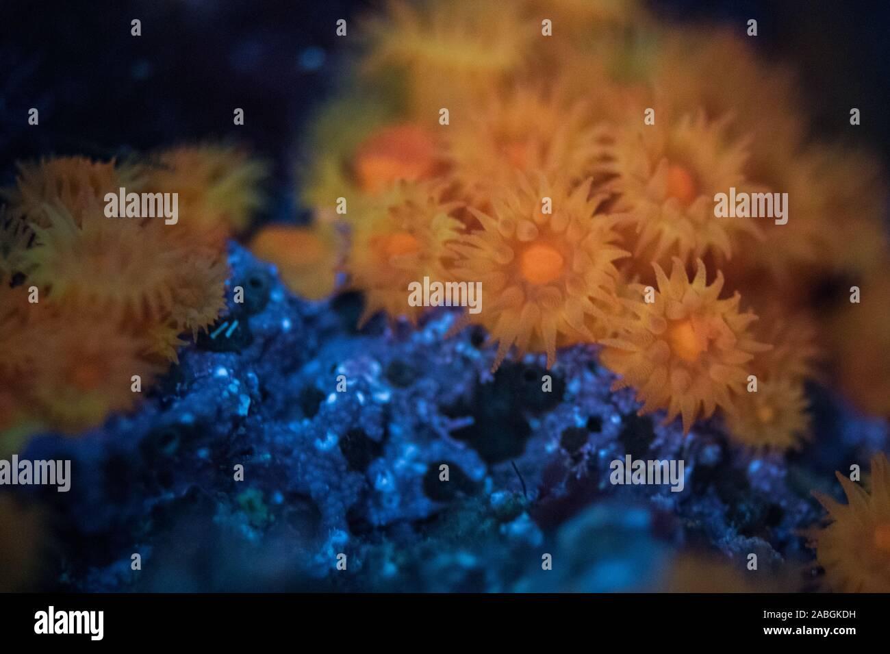 Sea Anemones Stock Photo