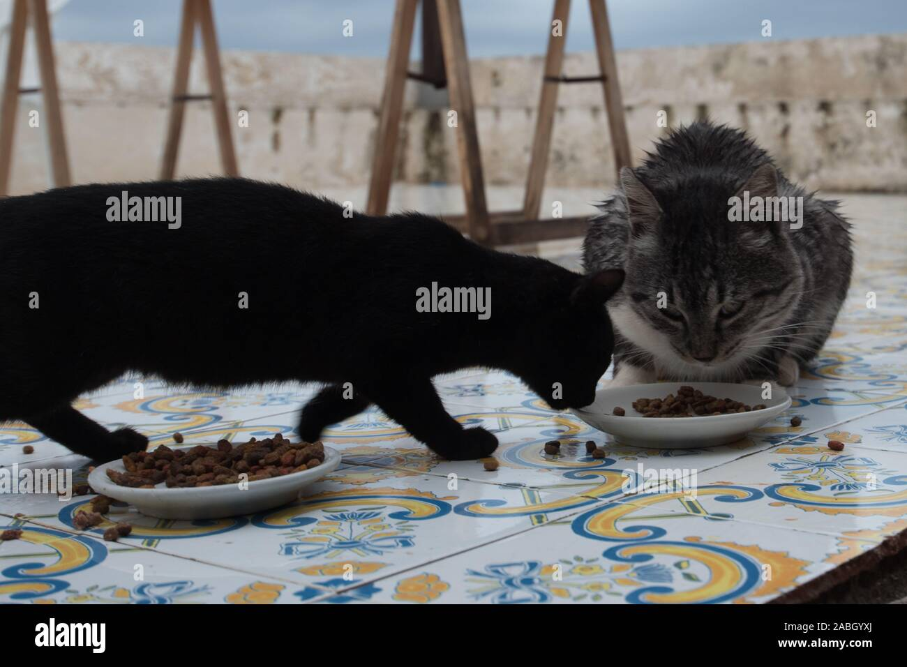 Cats eating from a bowl Stock Photo
