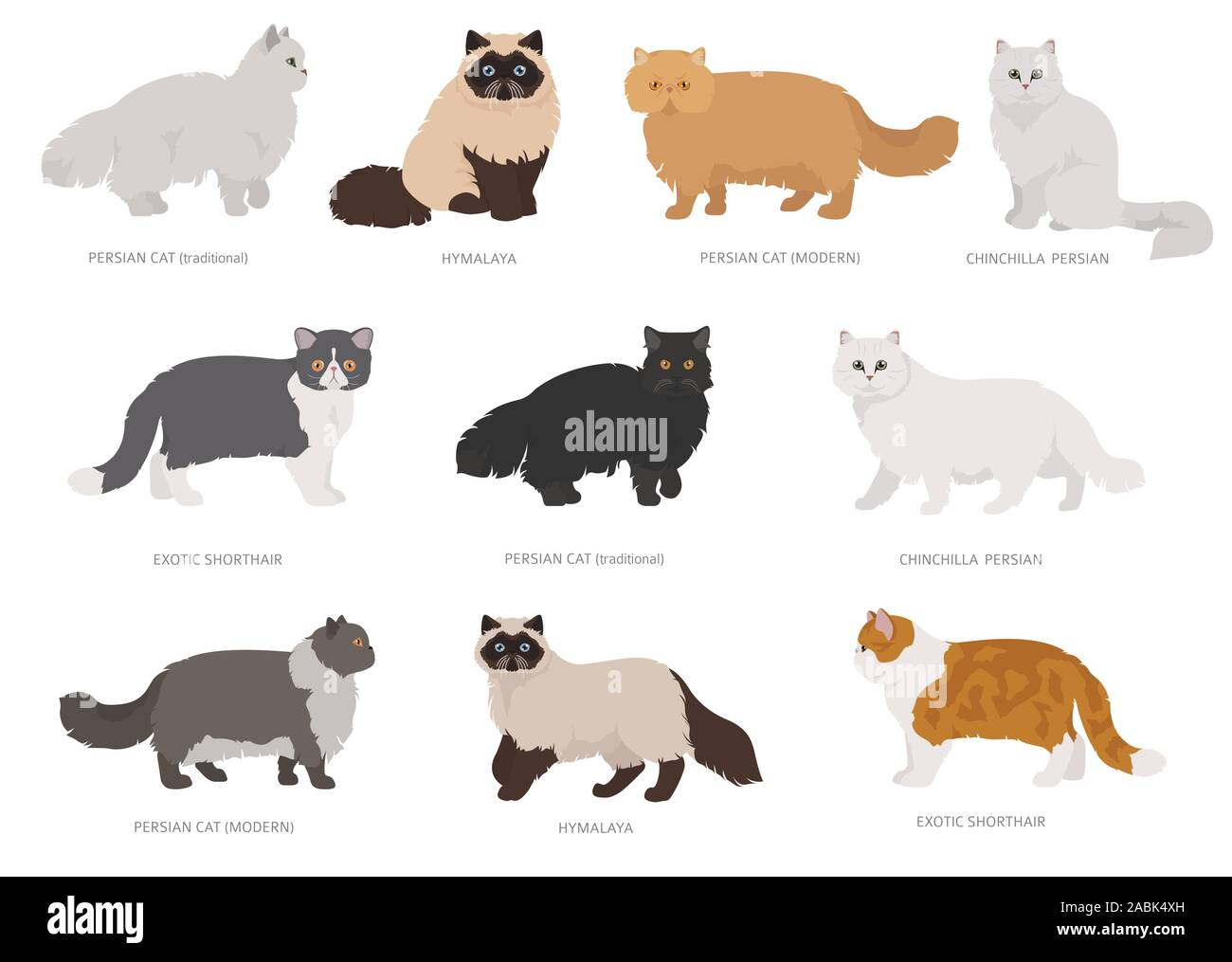 Persian Longhaired Type Cats Domestic Cat Breeds And Hybrids Collection Isolated On White Flat Style Set Vector Illustration Stock Vector Image Art Alamy