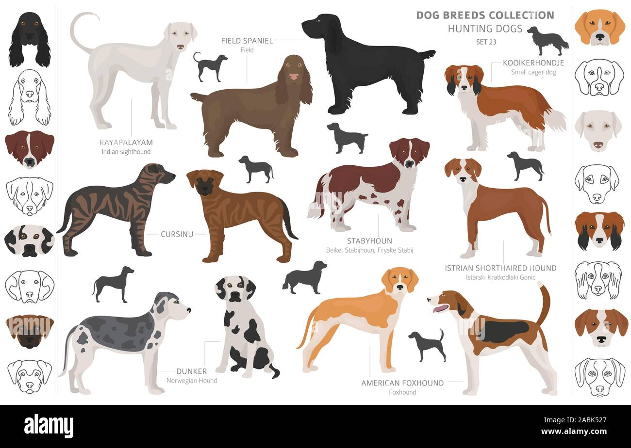 Hunting Dogs Collection Isolated On White Clipart Flat Style Different Color Portraits And Silhouettes Vector Illustration Stock Vector Image Art Alamy