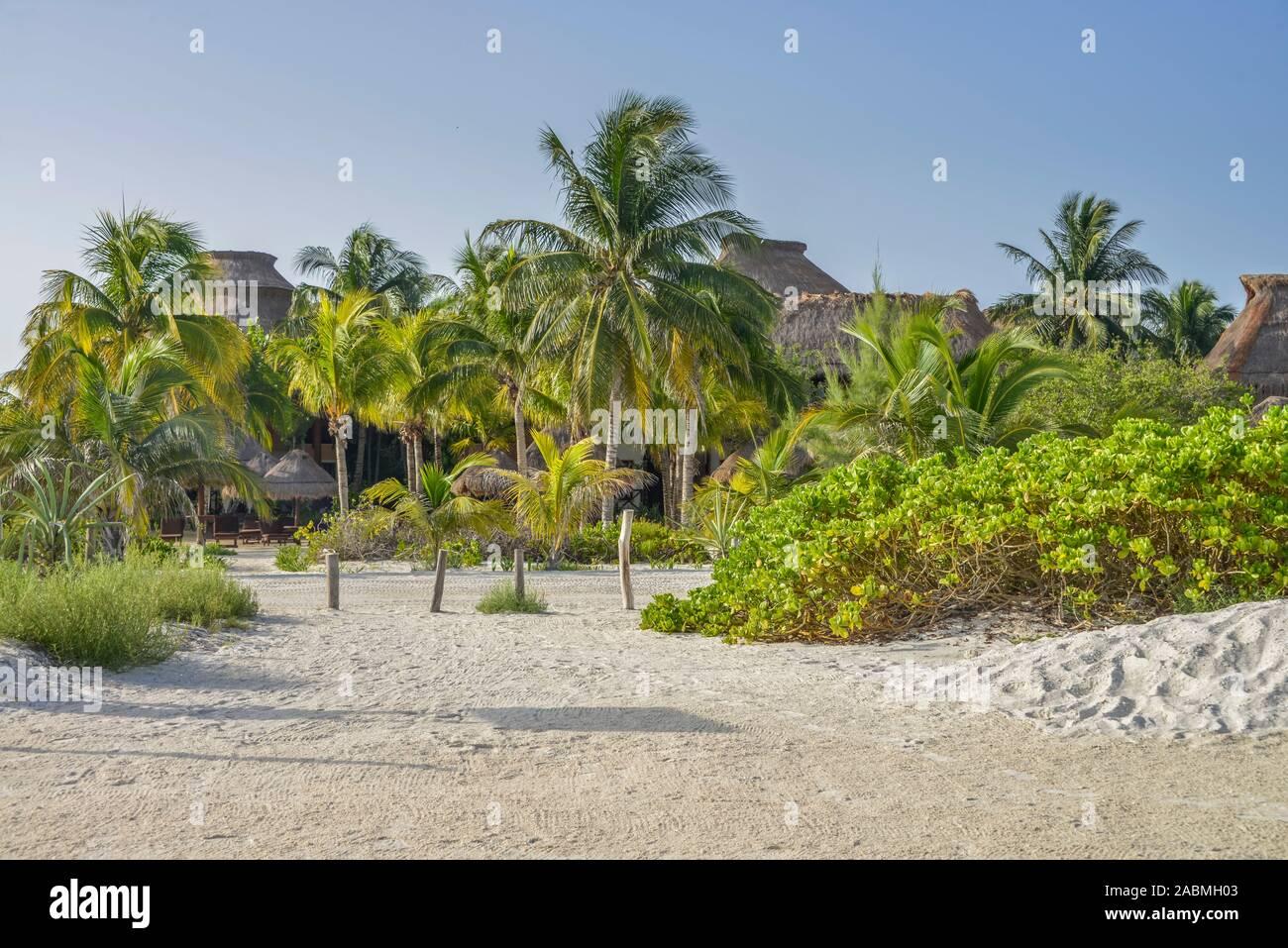 Palmenstrand, Isla Holbox, Quintana Roo, Mexiko Stock Photo
