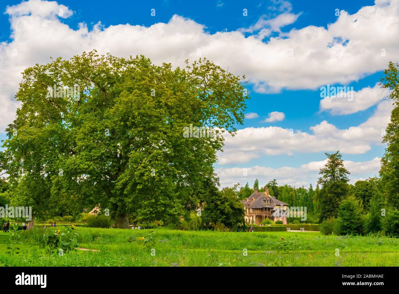 Lovely panoramic landscape view of a big, old tree in the Trianon garden of Versailles on a nice summer day with a blue sky. The lake and the Queen's... Stock Photo