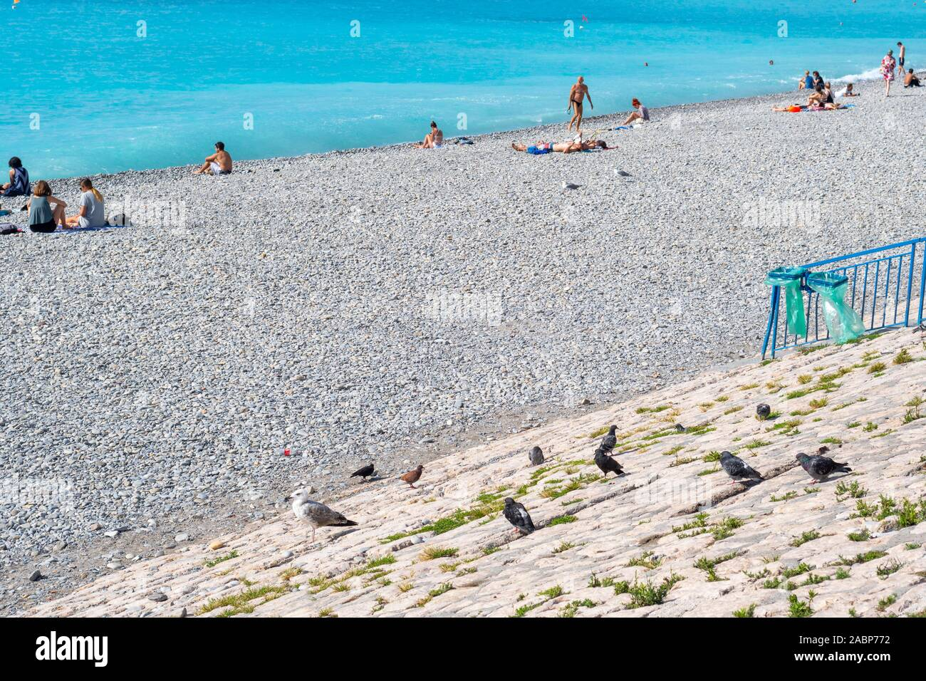 Pigeons and seagulls perch on a retaining wall along the rocky beach of the Bay of Angels as tourists enjoy the turquoise waters of the Mediterranean Stock Photo