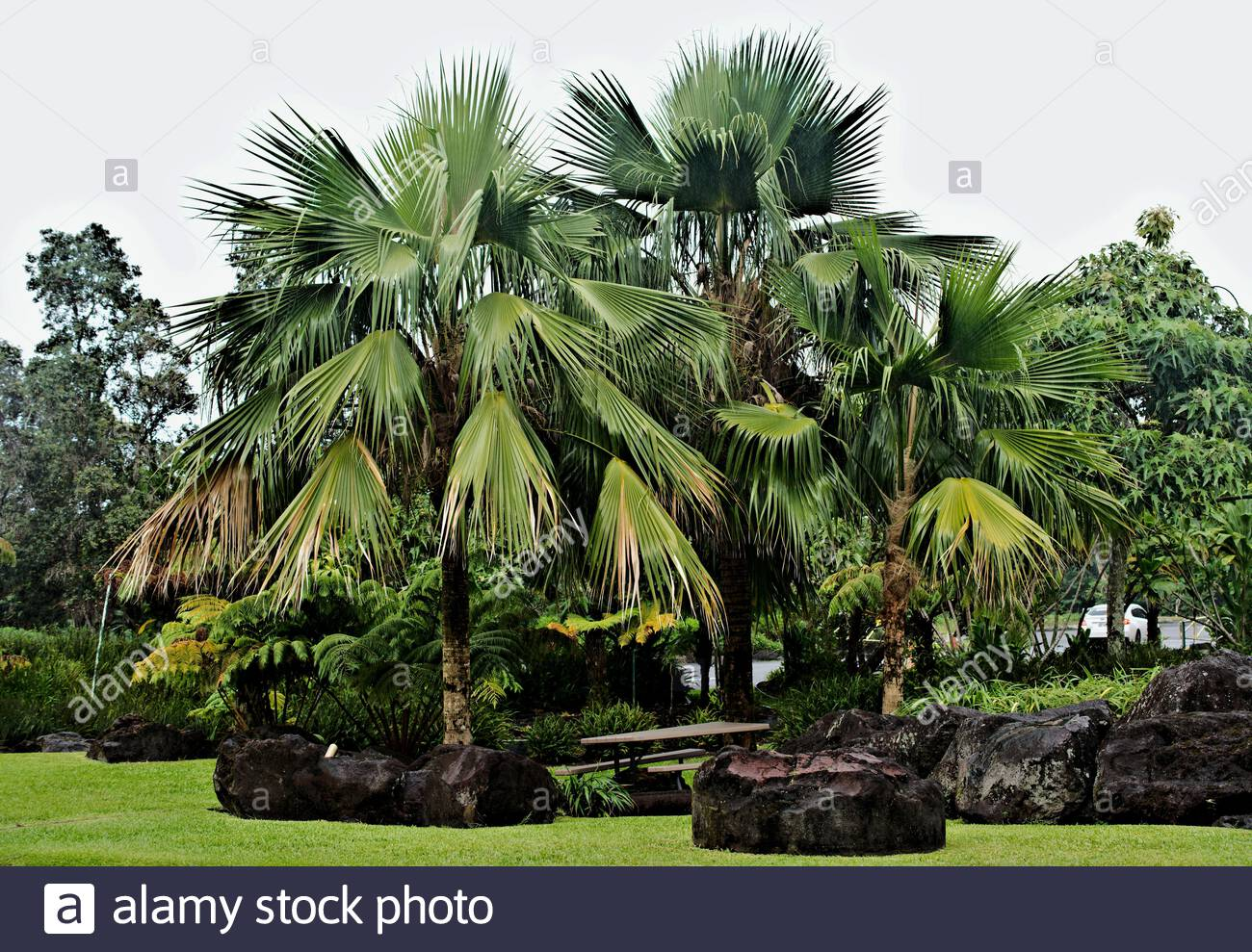 Tropical Garden Landscape With Group Of Palm Trees As A Focal