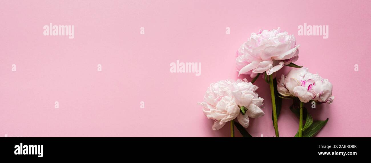 Beautiful peony flowers on pastel pink background, copy space for your text, top view, flat lay style. Happy mothers day greeting card mockup Stock Photo