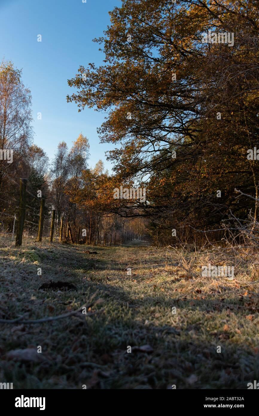 Mit Raureif überzogener Wanderweg im Naturschutzgebie Höltigbaum Stock Photo
