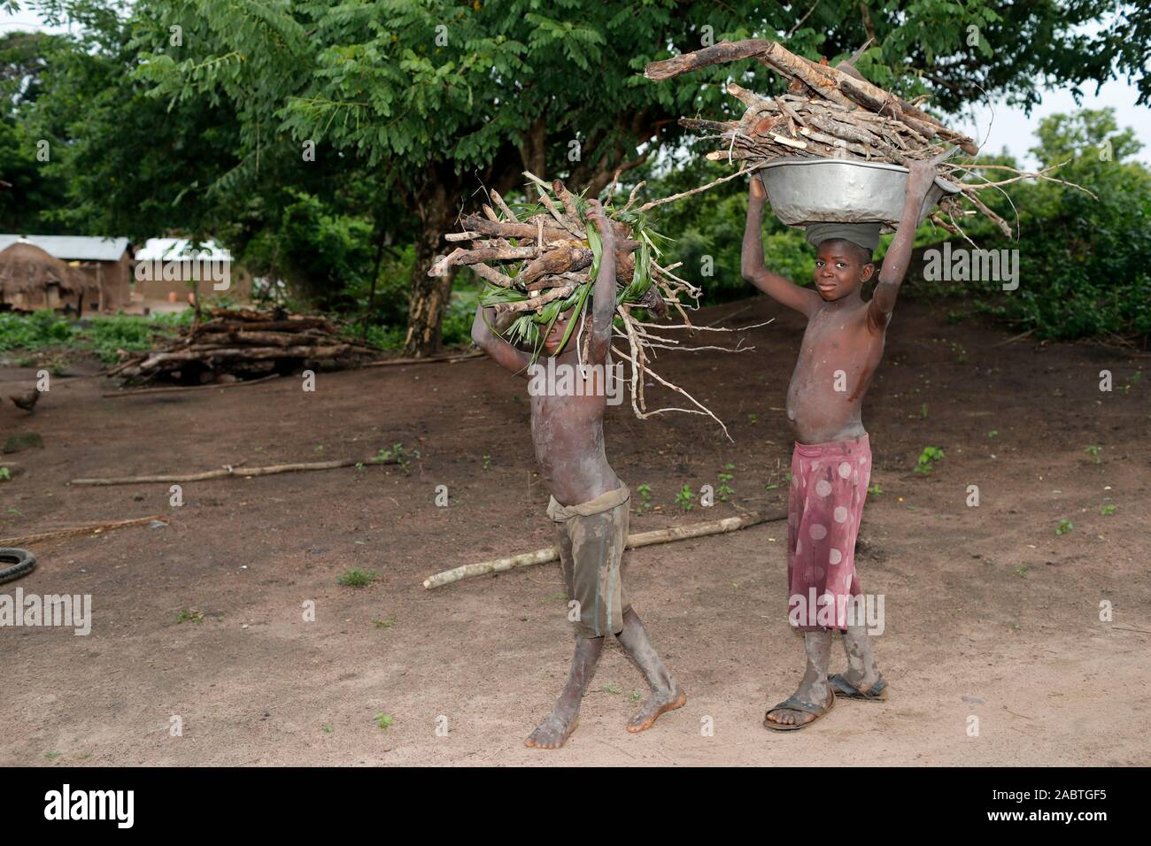 African village. Boys carrying firewood on their heads.  Daily life.  Datcha-Attikpaye. Togo. Stock Photo