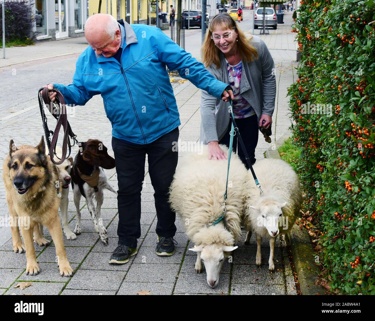 Schkeuditz, Germany. 21st Oct, 2019. Werner Dreßler walking with his animals, three dogs and two sheep in the city centre. A woman uses the opportunity to stroke a sheep briefly. The 79-year-old master toolmaker takes the animals for a walk in the city every day and is an eye-catcher for locals and visitors alike. Credit: Waltraud Grubitzsch/dpa-Zentralbild/ZB/dpa/Alamy Live News Stock Photo