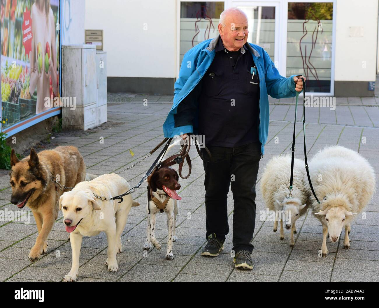 Schkeuditz, Germany. 21st Oct, 2019. Werner Dreßler walking with his animals, three dogs and two sheep in the city centre. The 79-year-old master toolmaker takes the animals for a walk in the city every day and is an eye-catcher for locals and visitors alike. Credit: Waltraud Grubitzsch/dpa-Zentralbild/ZB/dpa/Alamy Live News Stock Photo