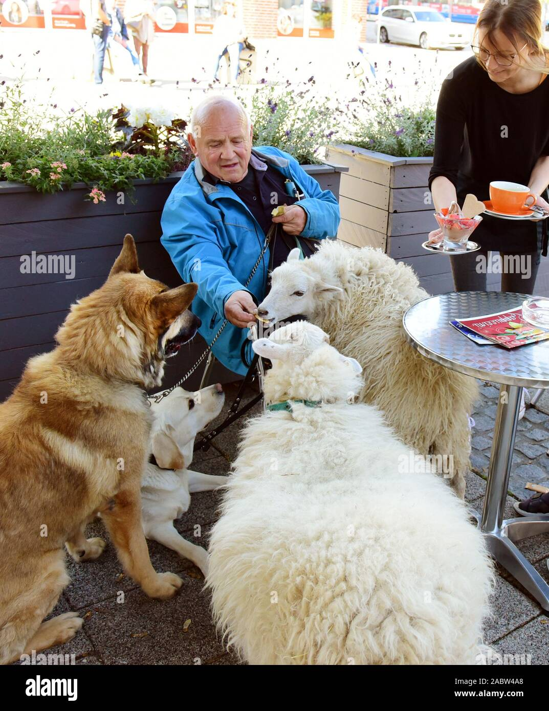 Schkeuditz, Germany. 21st Oct, 2019. Werner Dreßler sits with his animals, three dogs and two sheep in Jacqueline Rudolph's ice cream parlour. While he wants to enjoy ice cream and coffee, sheep and dogs are already waiting for the obligatory delicious biscuits. The 79-year-old master toolmaker takes the animals for a walk in the city every day and is an eye-catcher for locals and visitors alike. Credit: Waltraud Grubitzsch/dpa-Zentralbild/ZB/dpa/Alamy Live News Stock Photo