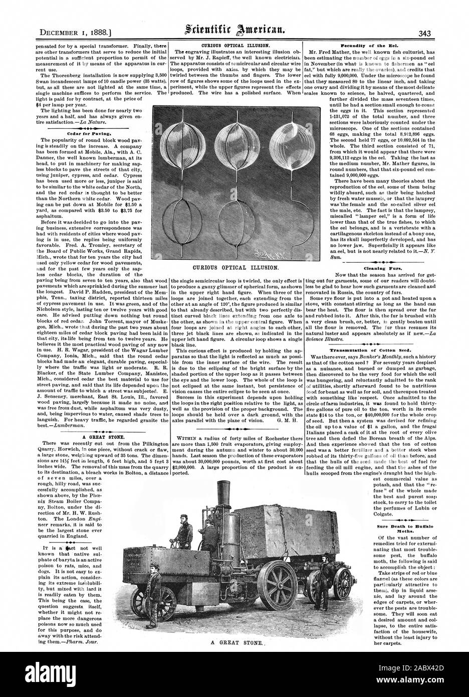 Cedar for Paving. A GREAT STONE. CURIOUS OPTICAL ILLUSION. Fecundity of the Eel. Cleaning Furs. Transmutation of Cotton Seed. CURIOUS OPTICAL ILLUSION. A GREAT STONE, scientific american, 1888-12-01 Stock Photo