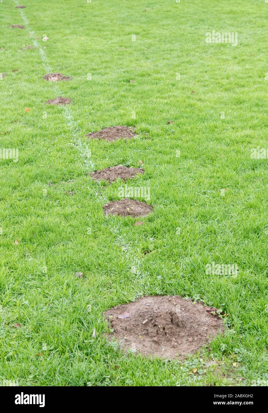Row of fresh mole hills on the touchline of a local football pitch / rugby ground - metaphor for the saying about making a mountain out of a molehill. Stock Photo