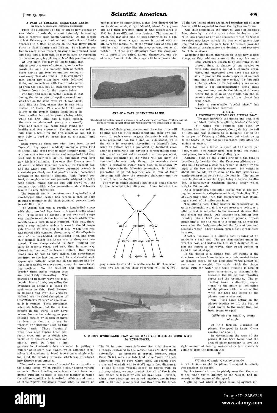 A PAIR OF LIMBLESS SNAKE-LIKE LAMBS. A SUCCESSFUL HYDROPLANE GLIDING BOAT. ONE OF A PAIR OF LIMBLESS LAMBS. UR WITH 14 HORSE-POWER., scientific american, 1907-06-15 Stock Photo