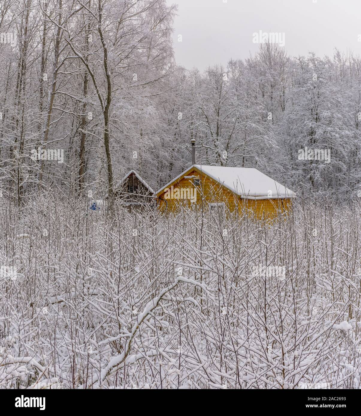 Yellow house in the snowy December forest. Stock Photo