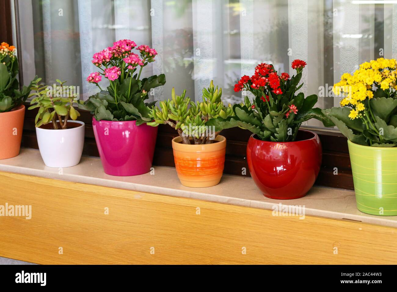Various Flowers In Pots Stand On The Windowsill Stock Photo