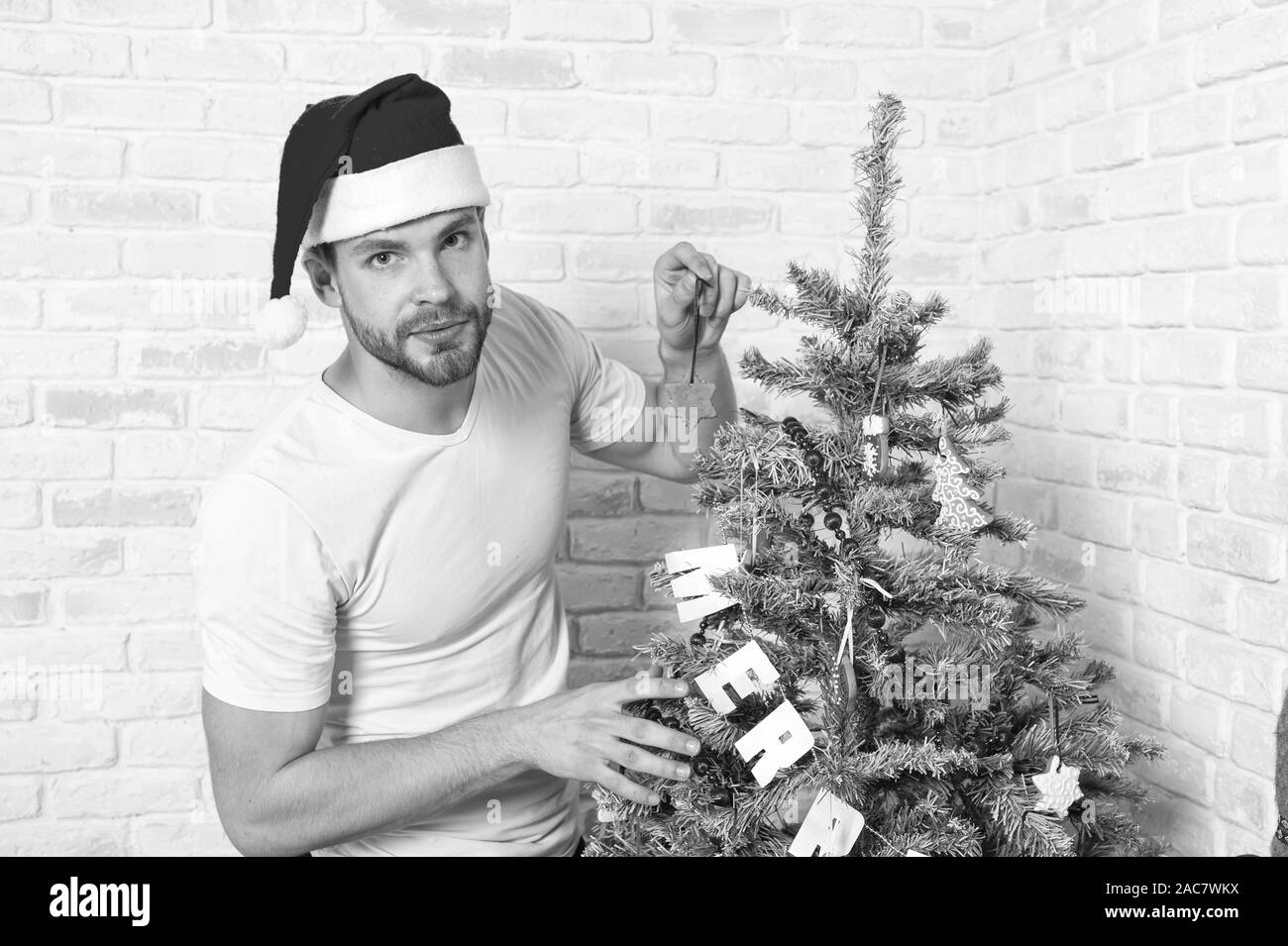 Winter holidays preparation and celebration. Man santa decorate Christmas tree with gingerbread star cookie. Homemade dessert, decoration and ornament. Merry xmas and happy new year. Stock Photo