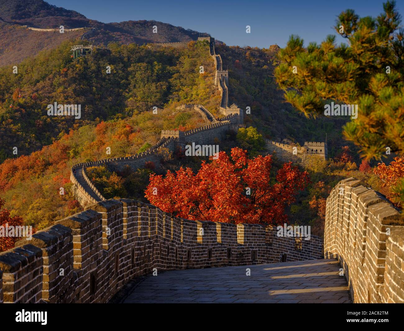 The Great Wall of China in autumn with nobody but red trees Stock Photo