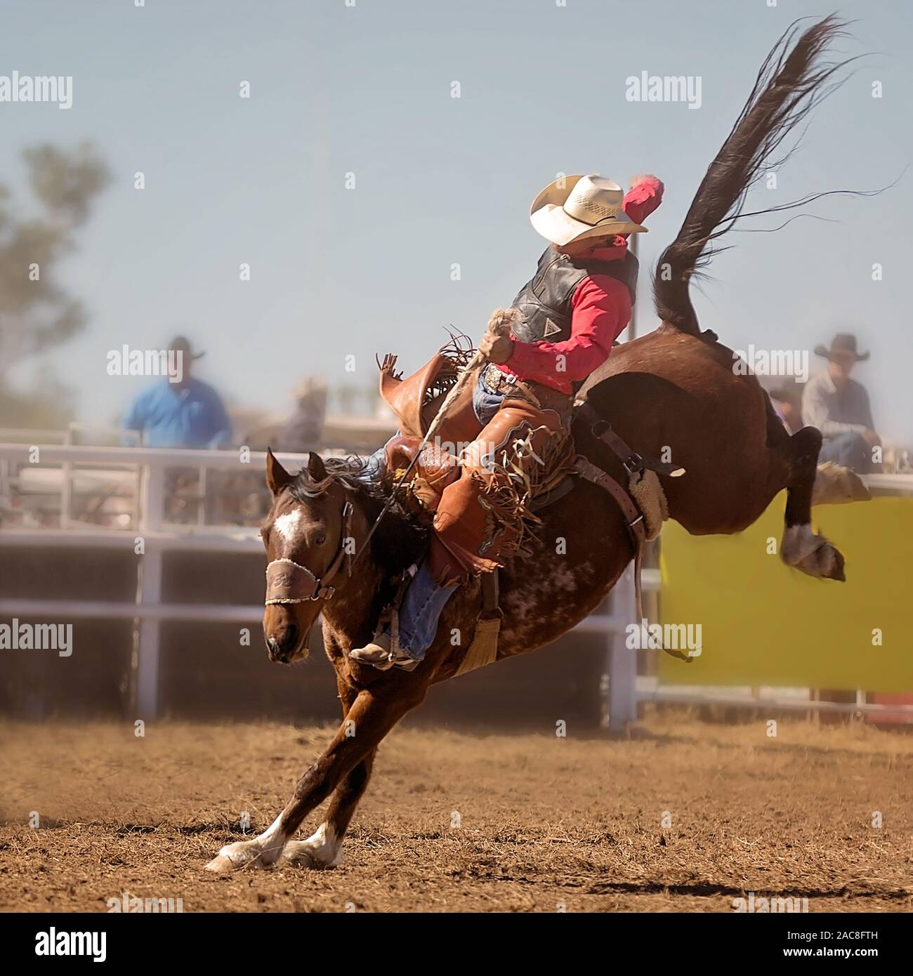A Cowboy Rides A Bucking Horse In Saddle Bronc Event At A Country Rodeo Stock Photo Alamy