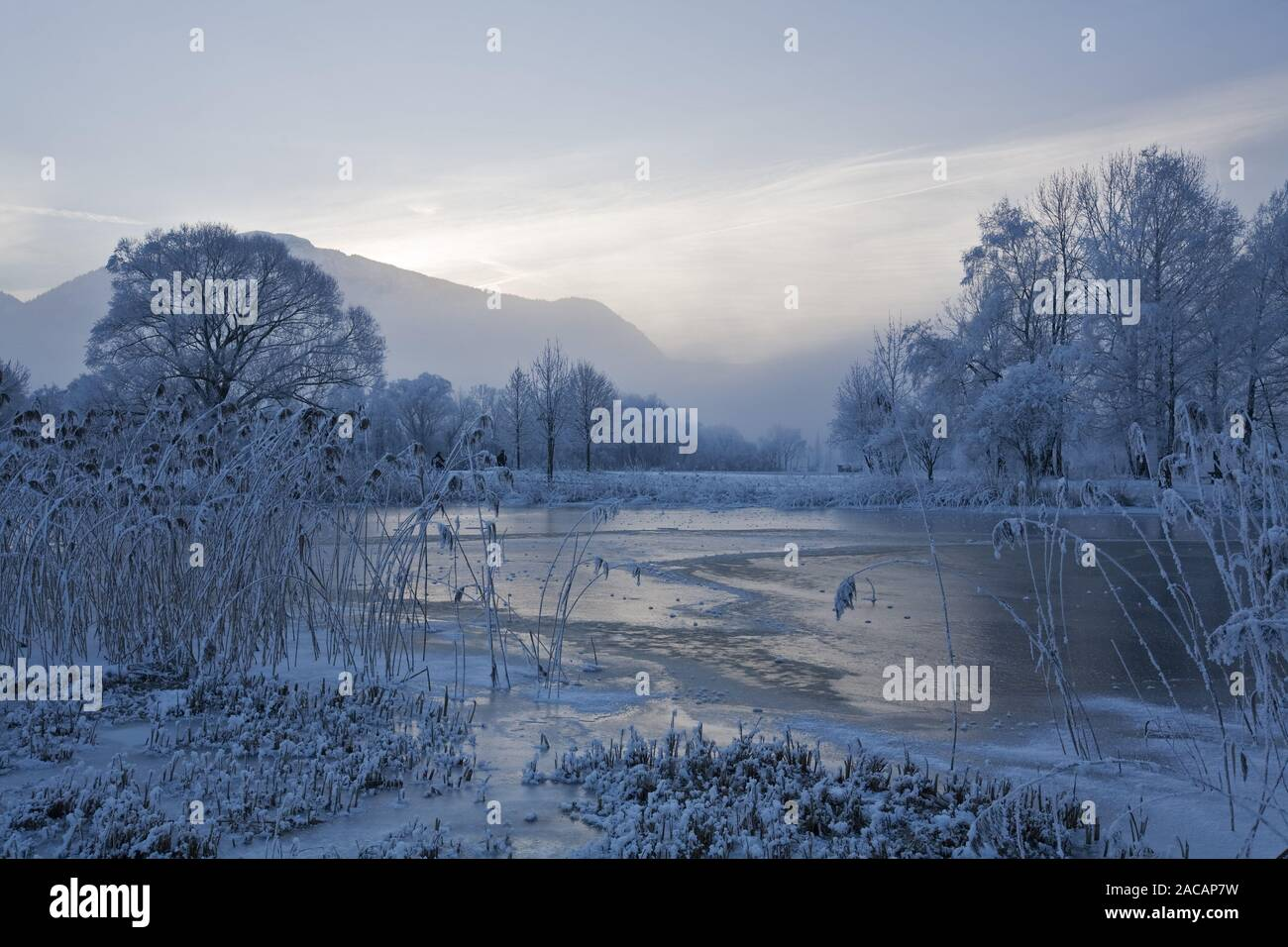 reeds and boathouses at lake kochelsee at winter, upper bavaria, germany Stock Photo