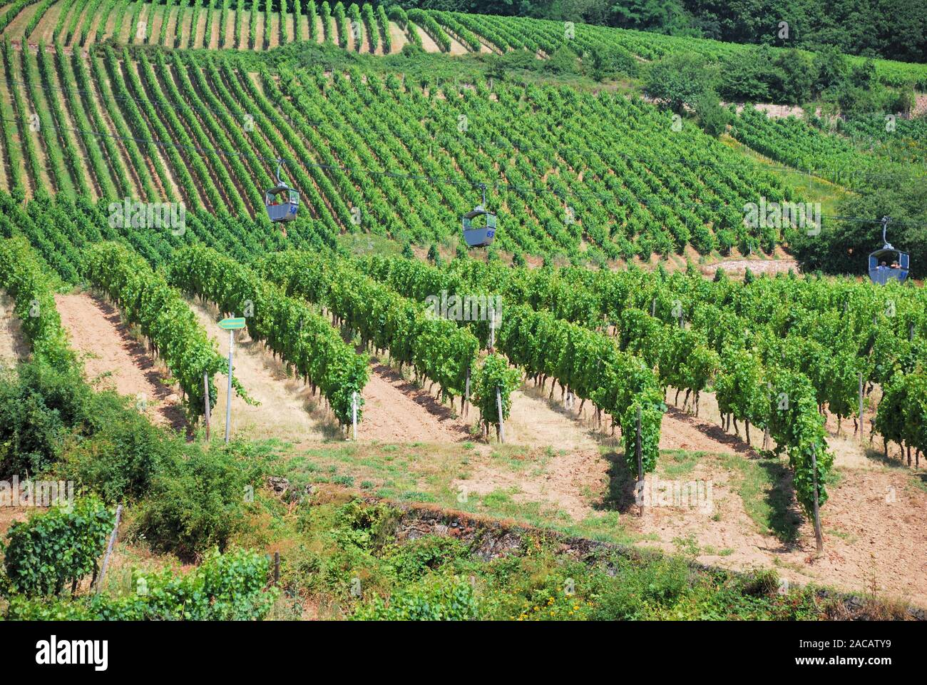 Grapevines in a vine and cable car Stock Photo