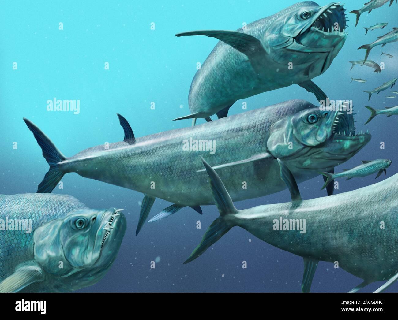 xiphactinus fish - 800×589