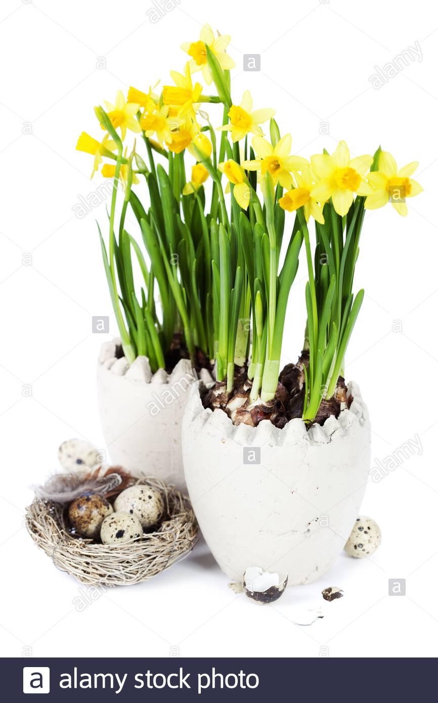 """Easter Bunny Egg Daffodil Primrose Flower Garden Flag 18/"""" x 12/"""""""