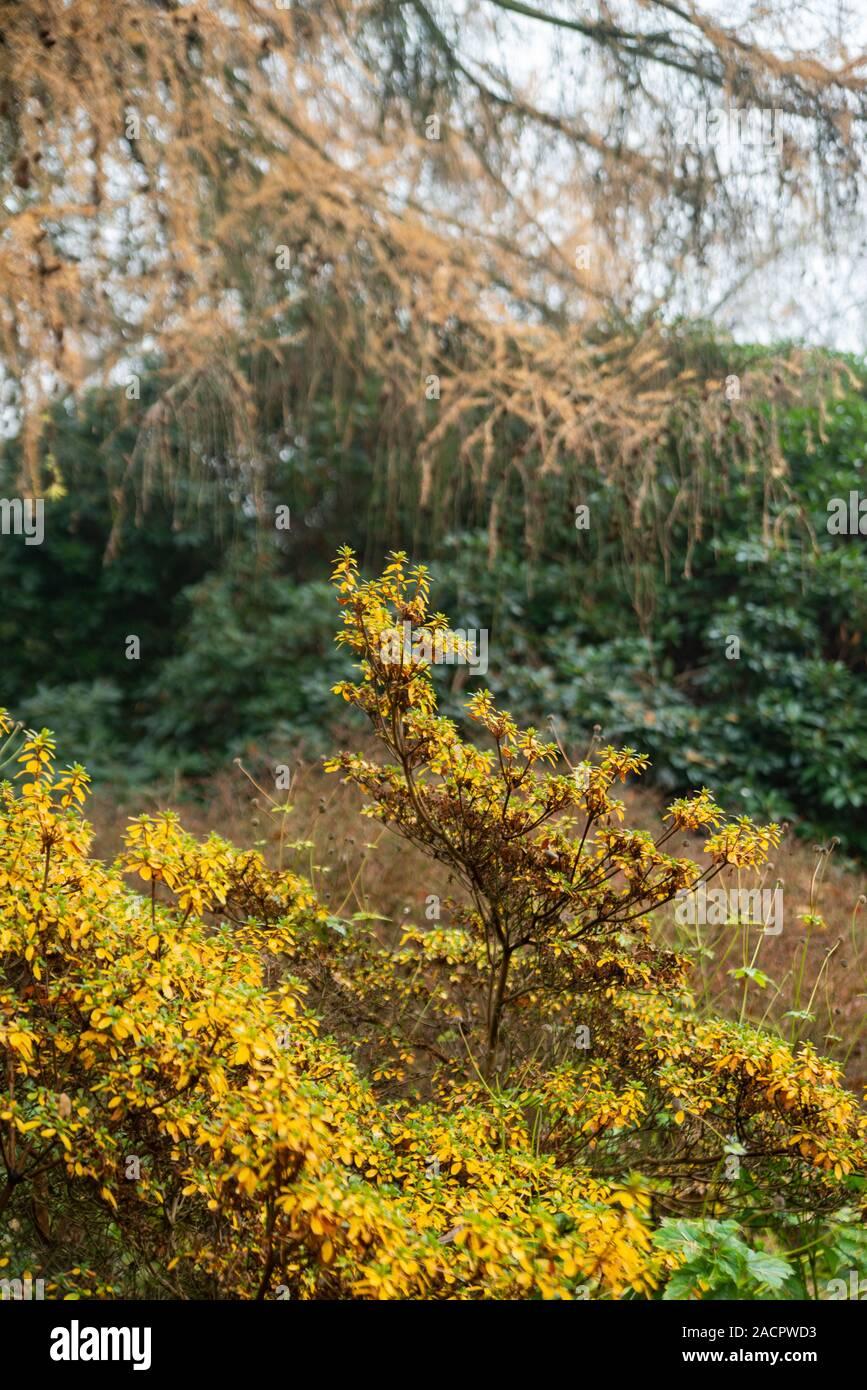 Herblicher Park Stock Photo