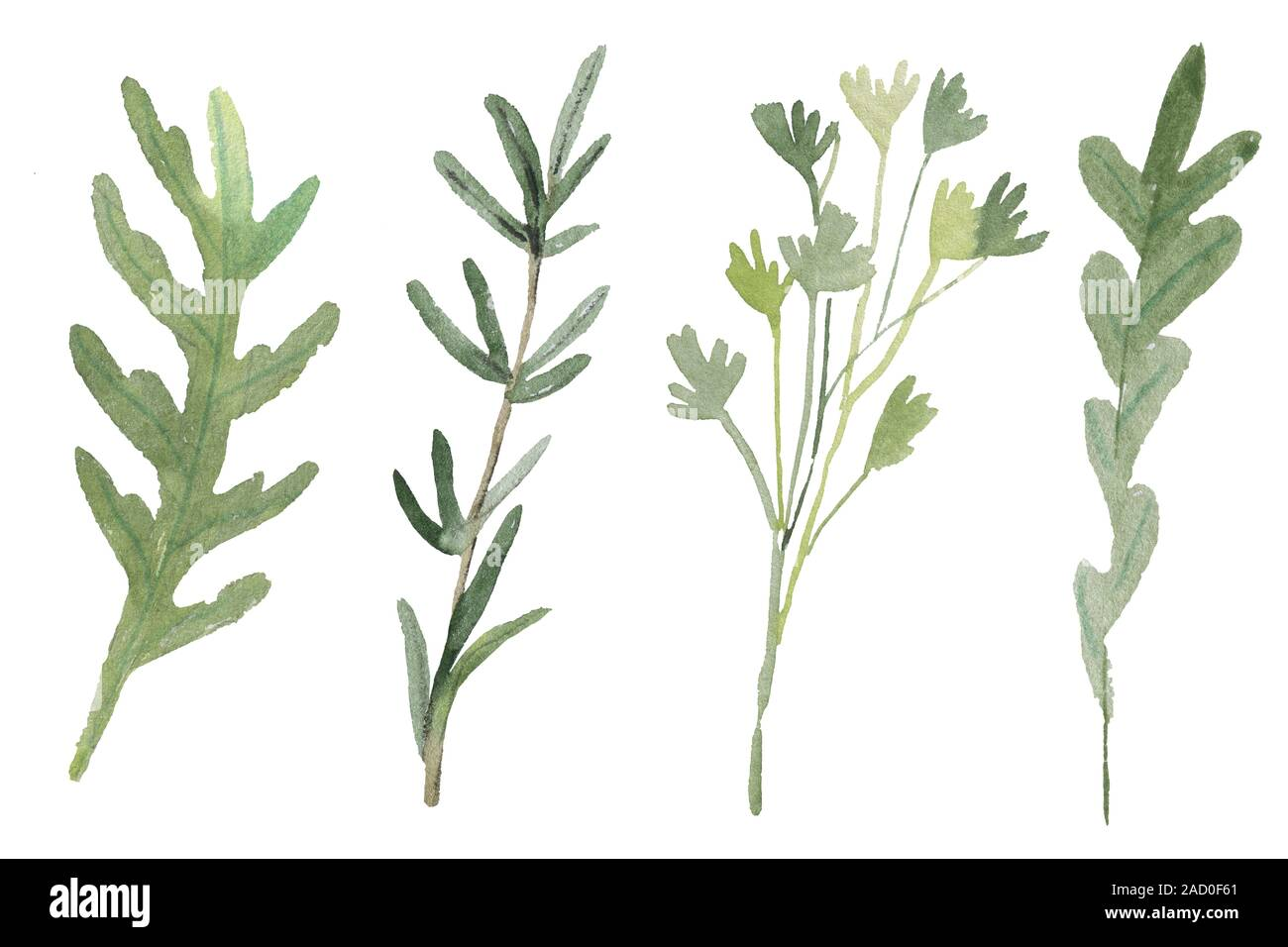 Fines Herbes. Traditional French herb blend for cooking: arugula, parsley, rosemary, oregano isolated on white. Watercolor Stock Photo