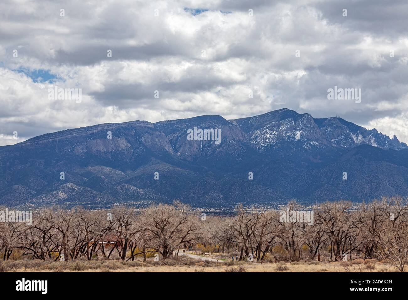 Cottonwood trees that line the Rio Grande with the Sandia Mountains in the backgound, Albuquerque, New Mexico, USA Stock Photo