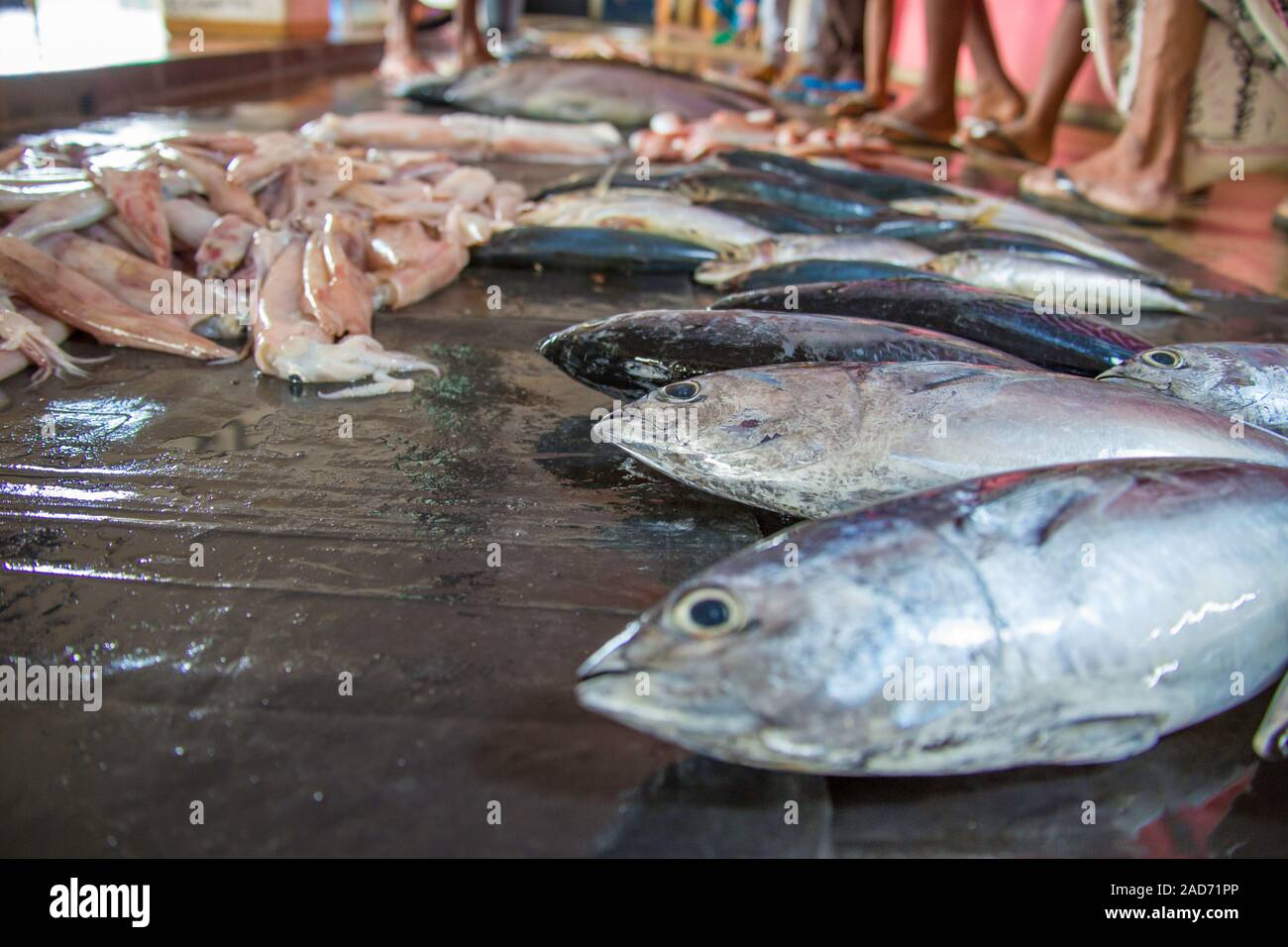 Fish and squid for sale in an outdoor market, Central Province, Sri Lanka. Stock Photo