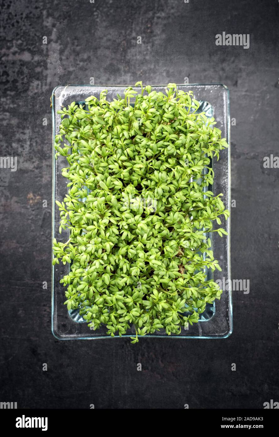Fresh garden cress germ bud as top view on a black board with copy space Stock Photo