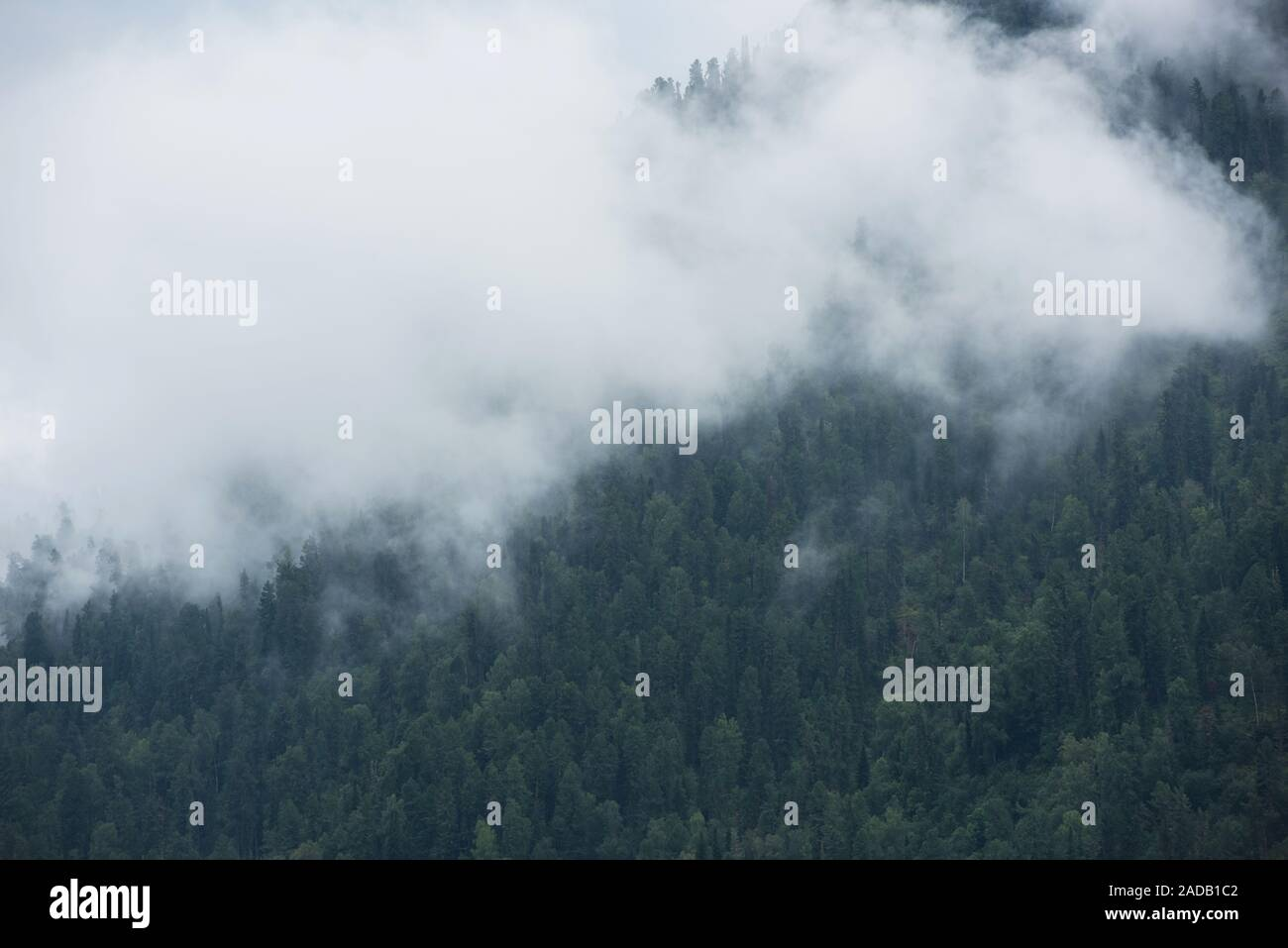 Forested mountain slope Stock Photo