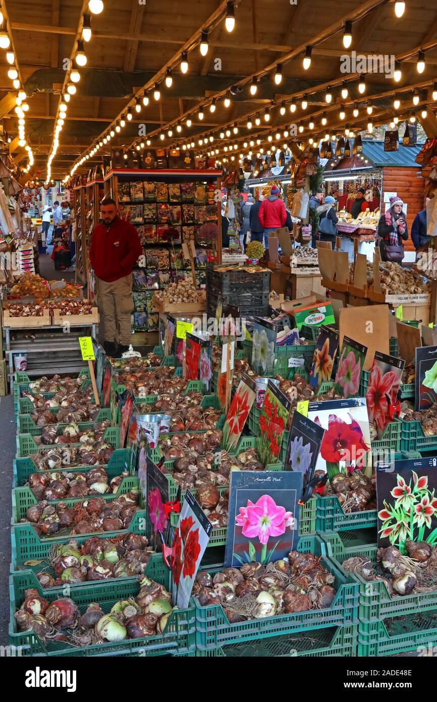 Dutch Bulbs on sale,German market,Manchester Christmas markets,Albert Square,Manchester,Greater Manchester,England,UK,M2 5DB Stock Photo
