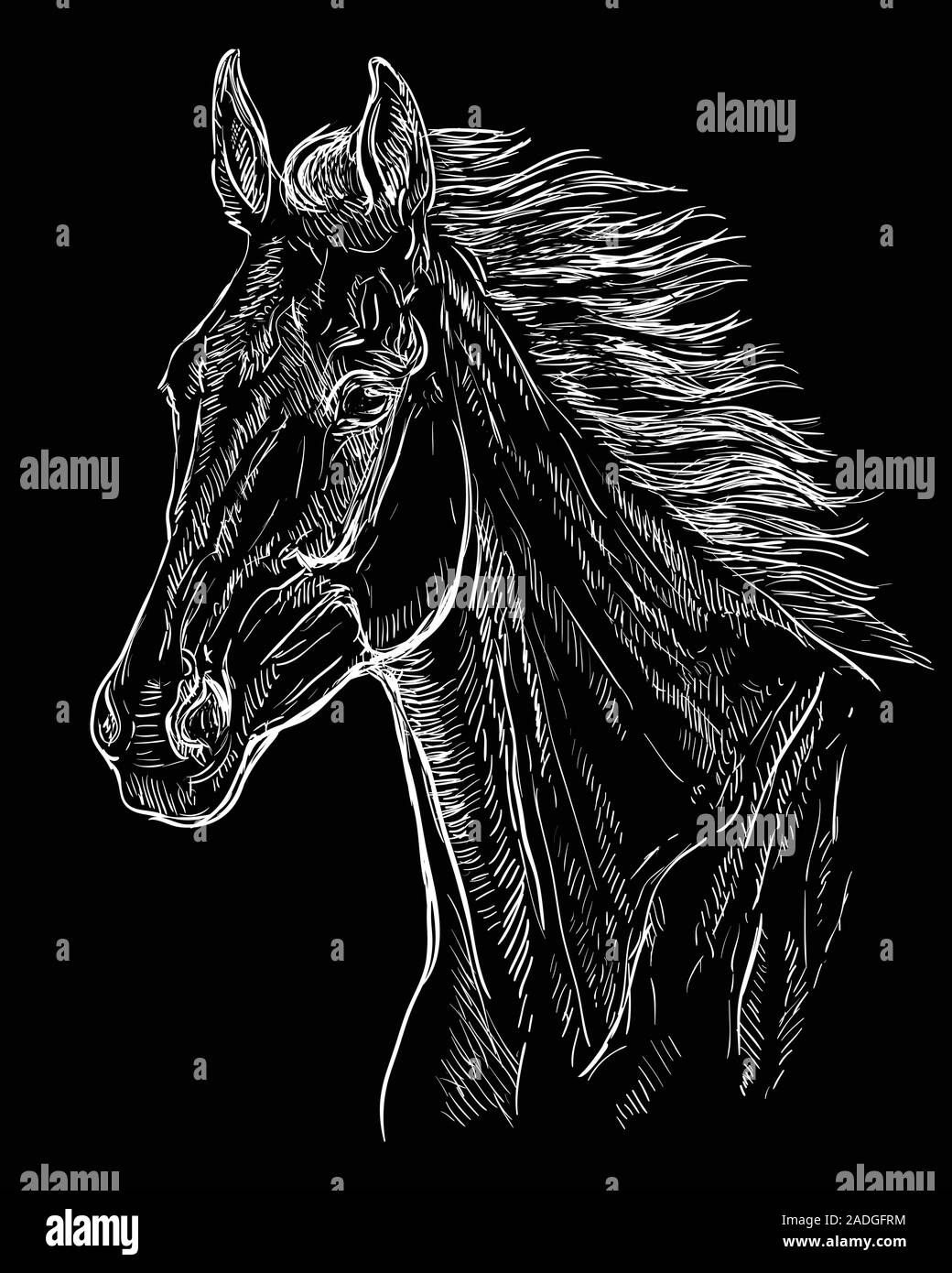 Hand Drawing Horse Portrait Horse Head With Long Mane In White Color Isolated On Black Background Vector Hand Drawing Illustration Retro Style Port Stock Vector Image Art Alamy