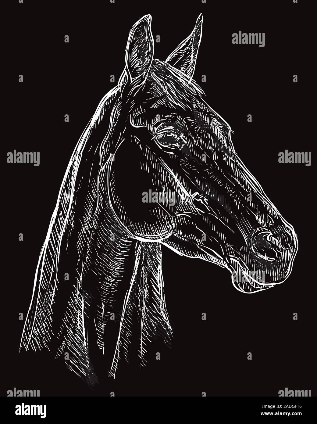 Hand Drawing Horse Portrait Horse Head In Profile In White Color Isolated On Black Background Vector Hand Drawing Illustration Retro Style Portrai Stock Vector Image Art Alamy